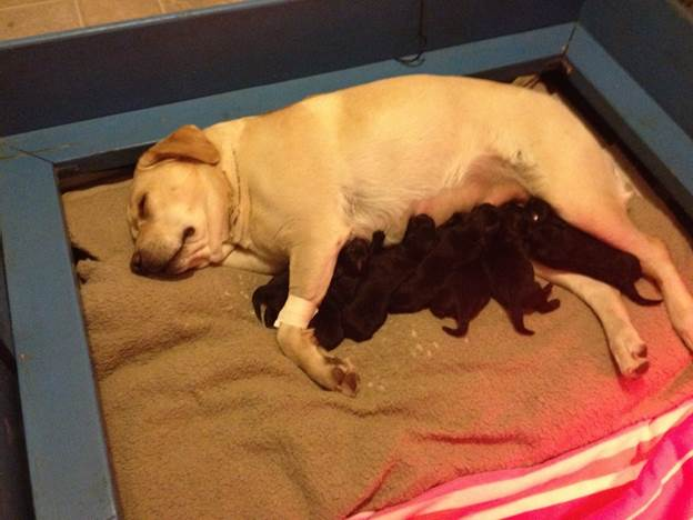 Dawn and her pups